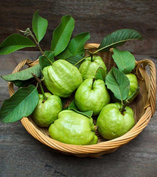 Guava Leaves Liquid Extract