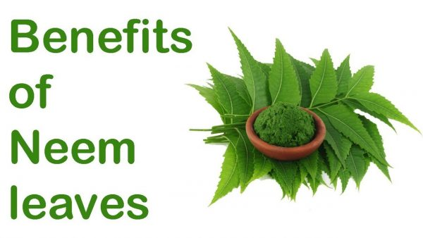 Neem Leaves, Powder, Oil & Extracts